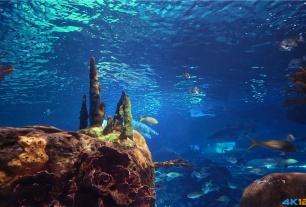 """比较放松的4K视频《水族馆的秘密》把客厅电视变成""""鱼缸""""[VP9/709MB]"""