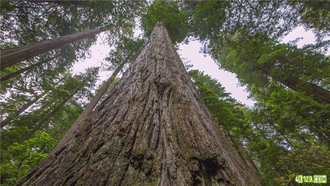 Redwood.National.and.State.Parks.Episode.1.2015.2160p.WEB-DL.Eng.ULTRAHDCLUB.mp4.jpg