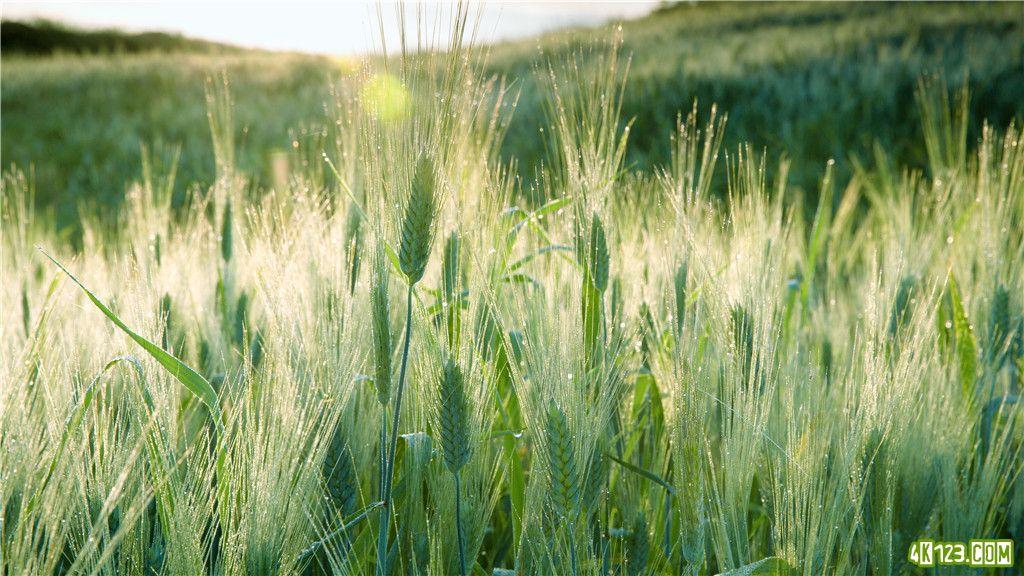 09-Grass.jpg